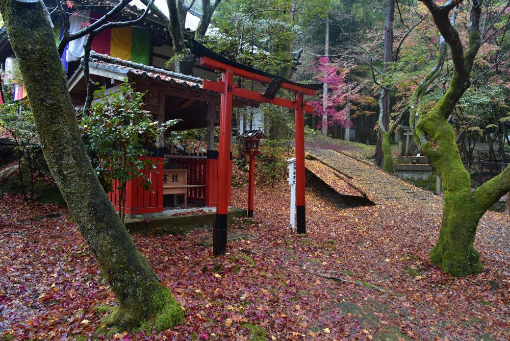 京都、そして奈良_e0367330_21082279.jpg