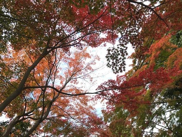 東福寺の紅葉見頃です!_d0020139_12134173.jpeg