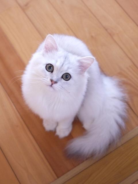 猫のお留守番 モチくん編。_a0143140_23254035.jpg