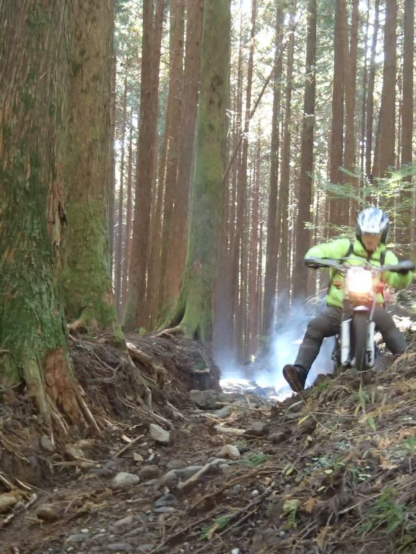 またまた富士山南麓の林道へ_f0119755_16123612.jpg