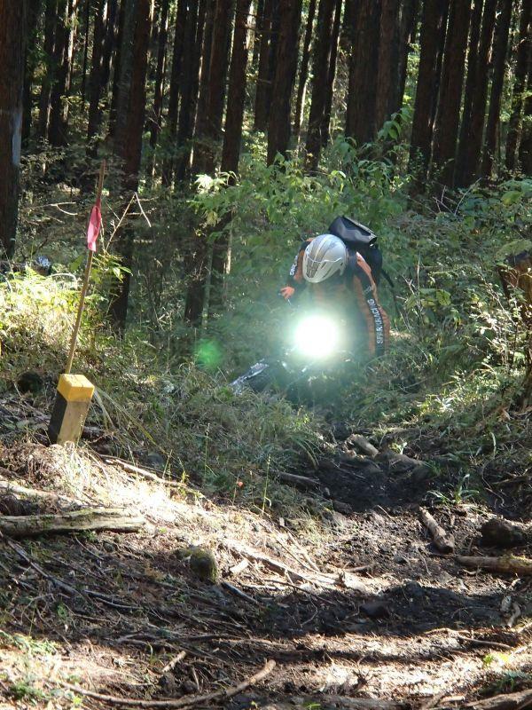 またまた富士山南麓の林道へ_f0119755_16123676.jpg