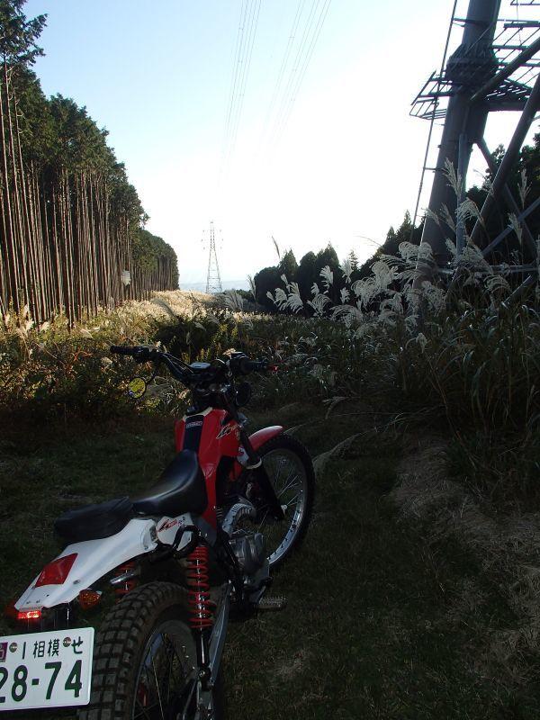 またまた富士山南麓の林道へ_f0119755_16280607.jpg