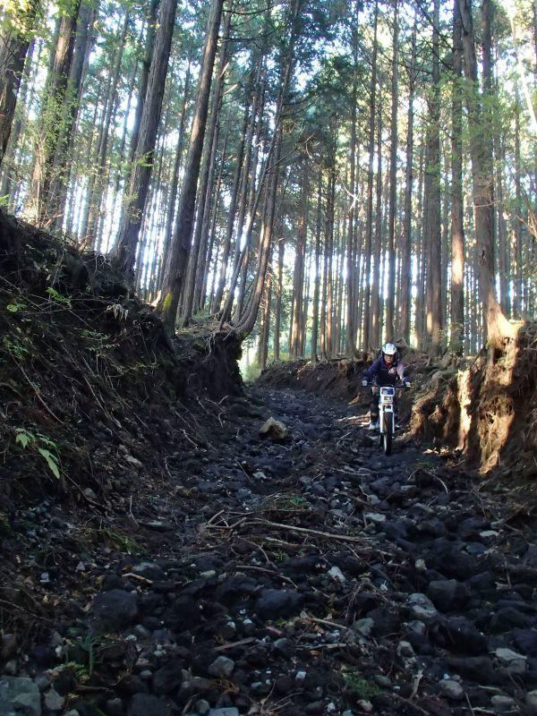 またまた富士山南麓の林道へ_f0119755_16414586.jpg
