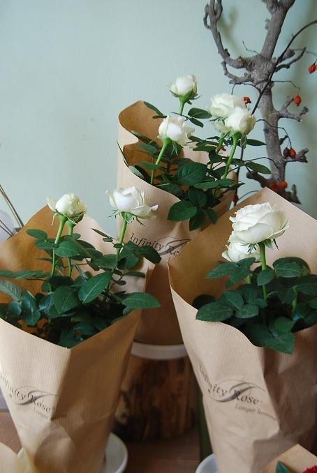 11月22日はいい夫婦の日。_a0201358_13220218.jpg