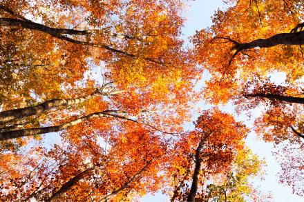 美人林の紅葉_a0025576_19145907.jpg