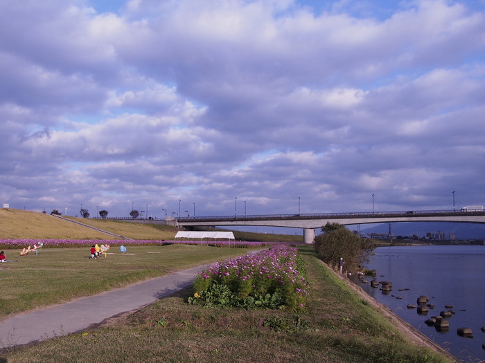 筑後河畔のコスモス_a0149488_2243941.jpg
