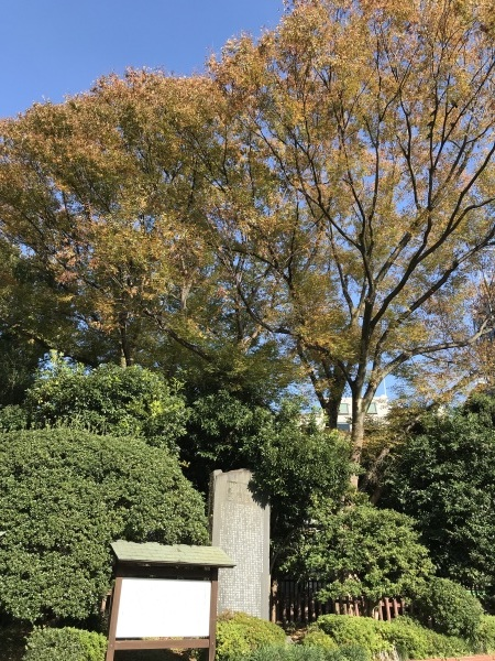 色付き始めた青山墓地と外苑の銀杏並木_e0397389_15083699.jpeg