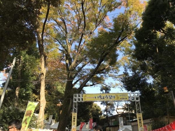 色付き始めた青山墓地と外苑の銀杏並木_e0397389_15120467.jpeg