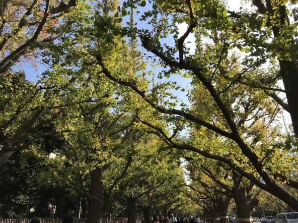 色付き始めた青山墓地と外苑の銀杏並木_e0397389_15123654.jpeg