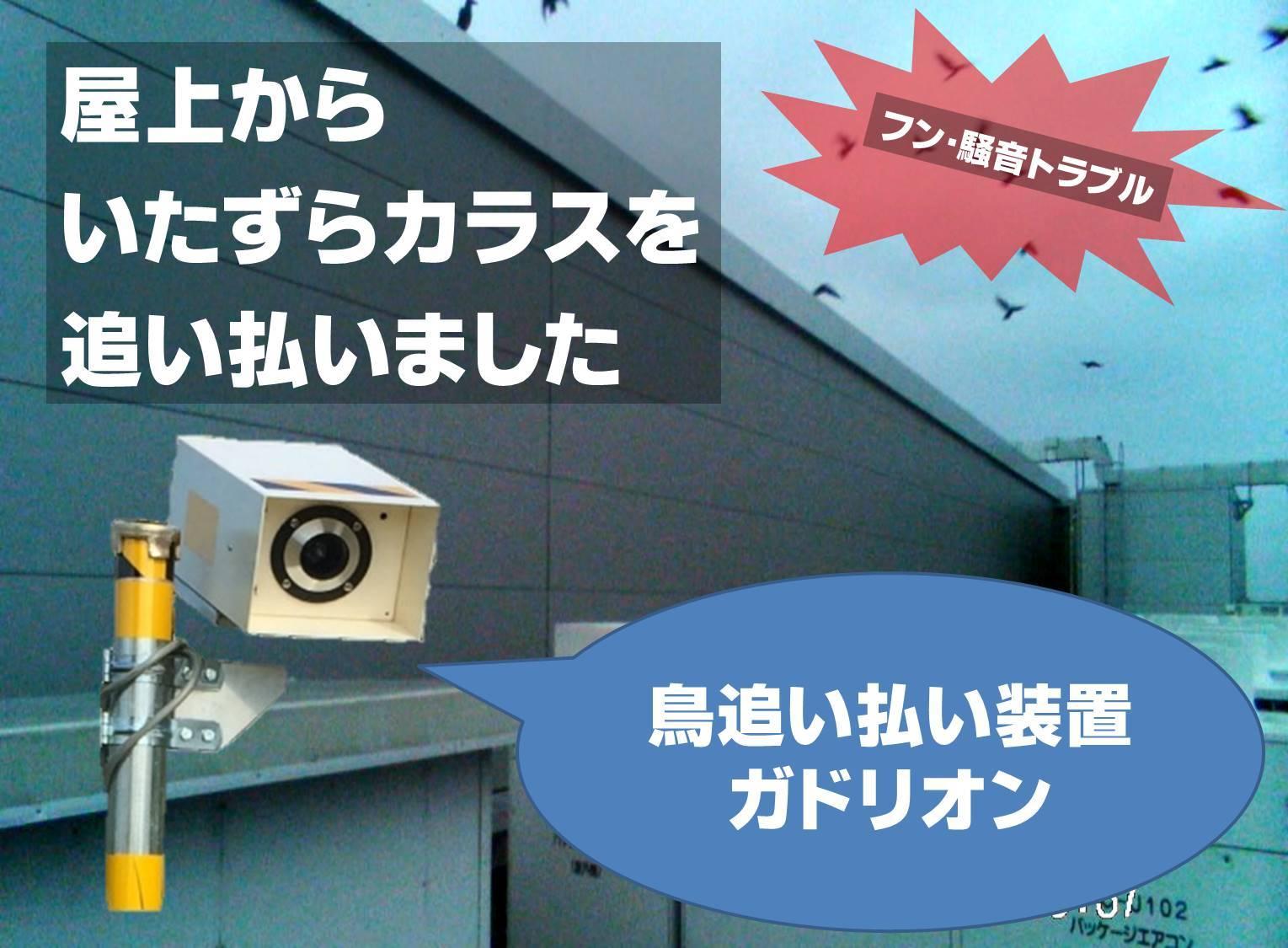 千葉県M市の屋上に集まるカラスの大群・・・音を聞かせた結果(動画あり)【鳥獣被害対策】_a0321697_15065814.jpg