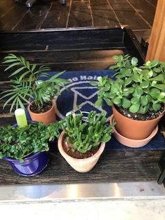 新たな植物ゲット。_d0096499_12544047.jpg