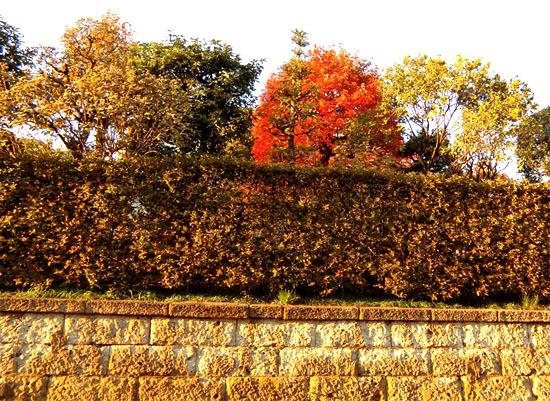 樹々も色づいて~_b0255303_17095106.jpg