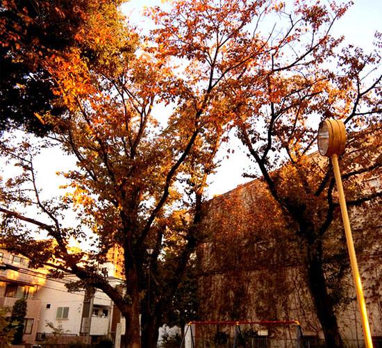 樹々も色づいて~_b0255303_17095922.jpg