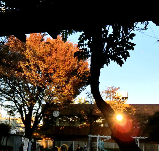 樹々も色づいて~_b0255303_17102185.jpg