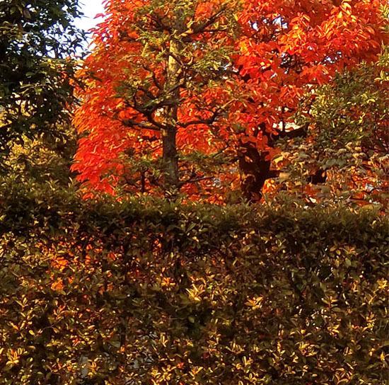 樹々も色づいて~_b0255303_17103354.jpg