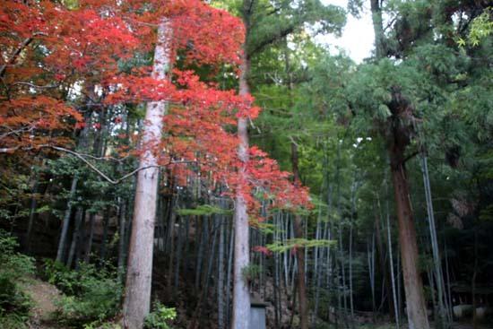 紅葉が始まった 今熊野観音寺_e0048413_22412370.jpg
