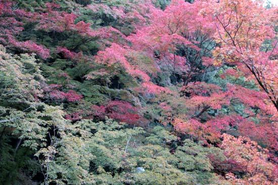 紅葉が始まった 今熊野観音寺_e0048413_22412657.jpg