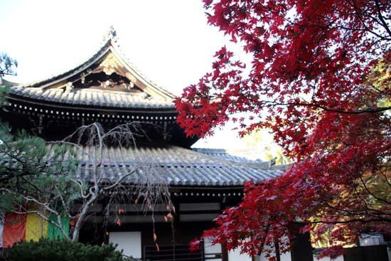 紅葉が始まった 今熊野観音寺_e0048413_22413384.jpg