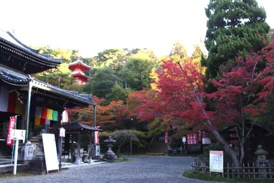 紅葉が始まった 今熊野観音寺_e0048413_22414254.jpg