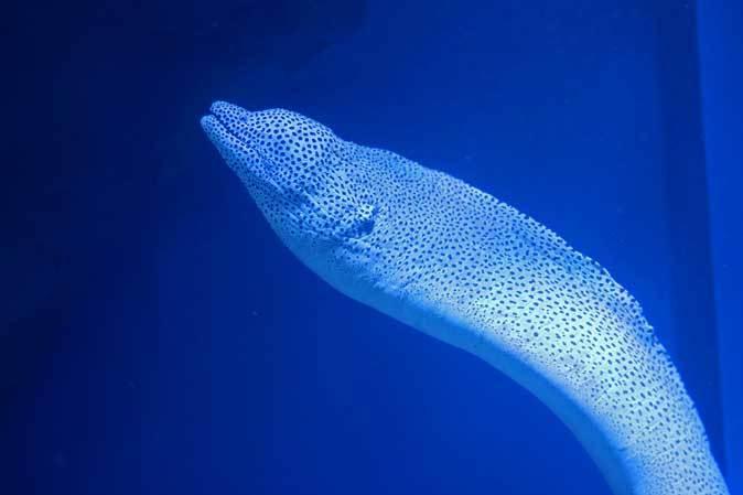 アオウミガメとウツボ(アクアパーク品川)_b0355317_21480380.jpg