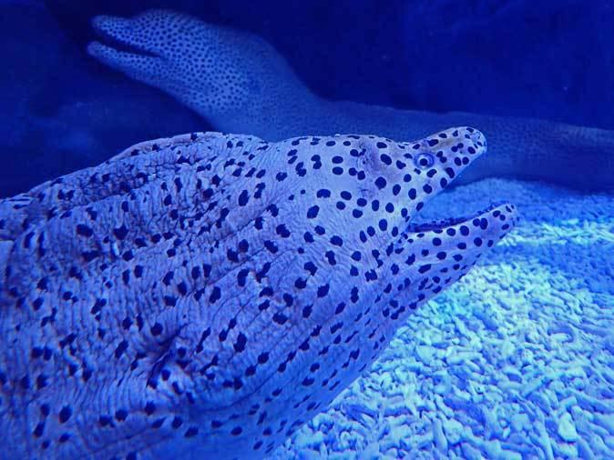 アオウミガメとウツボ(アクアパーク品川)_b0355317_21520284.jpg