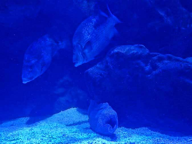アオウミガメとウツボ(アクアパーク品川)_b0355317_22014574.jpg