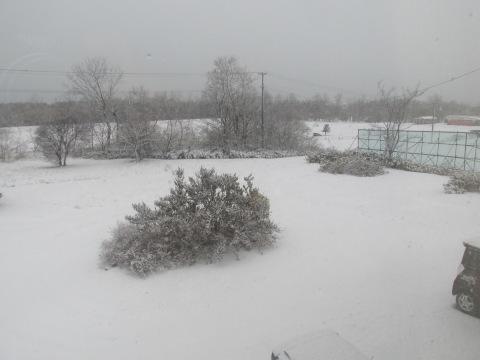 積雪2センチ!_d0072917_19182895.jpg