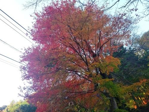 紅葉真っ盛り!_d0167225_09170804.jpg