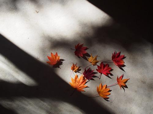 「11月のアトリエ」紅葉とパンと珈琲_b0185232_21041261.jpg