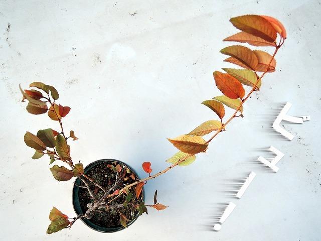木枯らしに吹かれて_c0062832_16554356.jpg