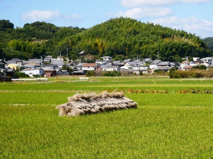 みかん・柿実る里山風景  2019-11-22 00:00  _b0093754_23063919.jpg