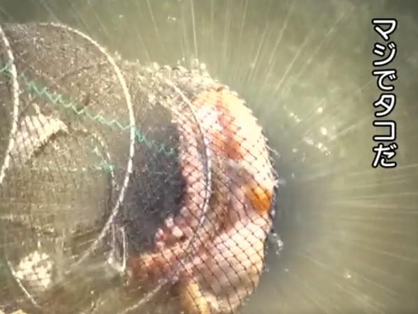 【コラム】三食ごはん 漁村編2 第8話 ついにタコを捕獲_c0152767_19455621.jpg