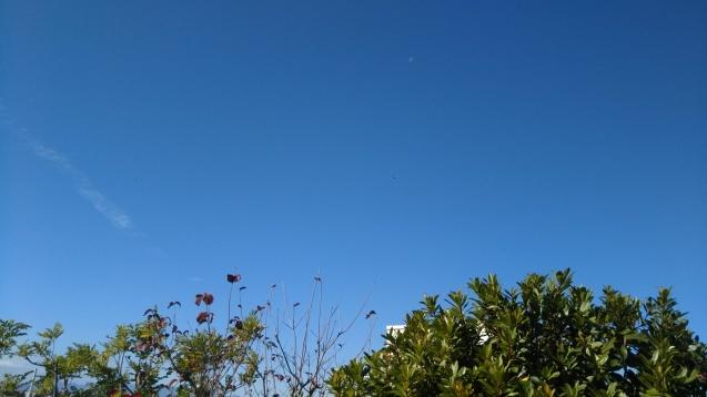 青空に飛行機_e0232277_13523260.jpg