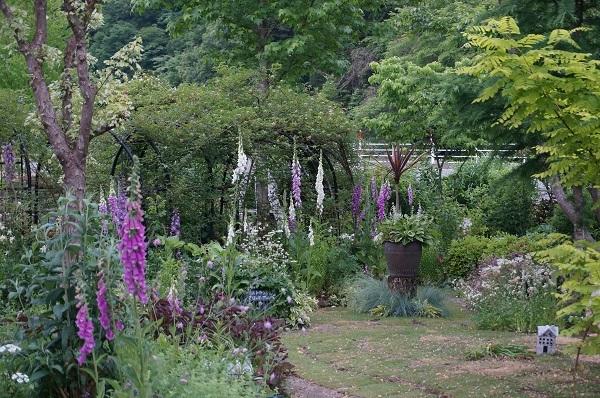 6月のノラの庭_e0365880_19300342.jpg
