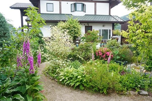 6月のノラの庭_e0365880_19314844.jpg