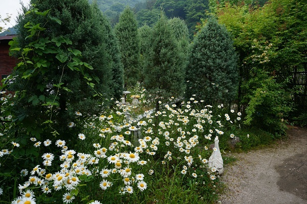 6月のノラの庭_e0365880_19320907.jpg