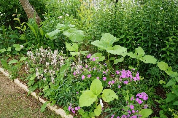 6月のノラの庭_e0365880_19322276.jpg