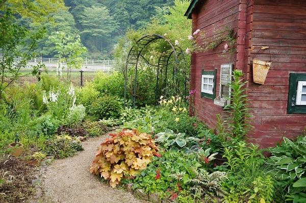 6月のノラの庭_e0365880_19333618.jpg