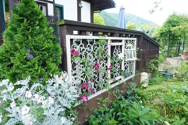 6月のノラの庭_e0365880_19342491.jpg