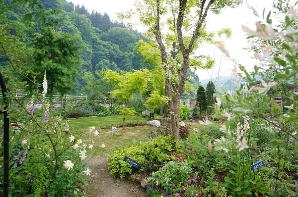 6月のノラの庭_e0365880_19543923.jpg