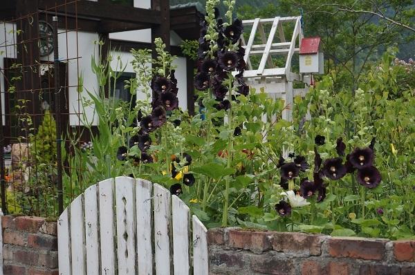 6月のノラの庭_e0365880_19555184.jpg