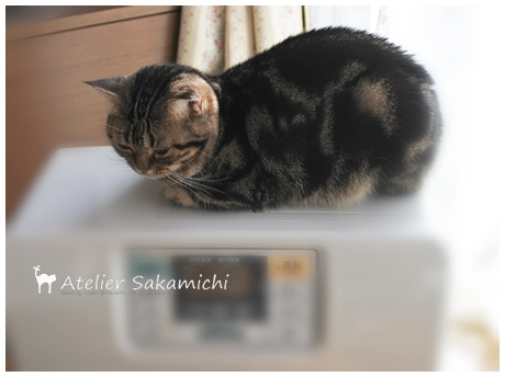 今季初のストーブ猫です。_f0214688_18154107.jpg