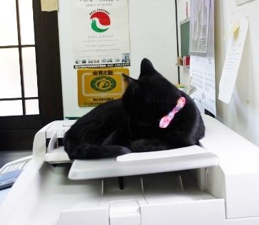 仕事熱心な店長さん☆_e0167795_12020381.jpg