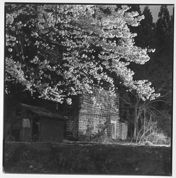 カラミ煉瓦の蔵と夜桜_f0173596_10374568.jpg