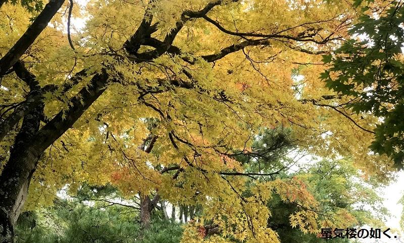 初秋の小諸「あの夏で待ってる」の舞台へ その03 懐古園そして西浦ダムは(R011021探訪)_e0304702_19091905.jpg