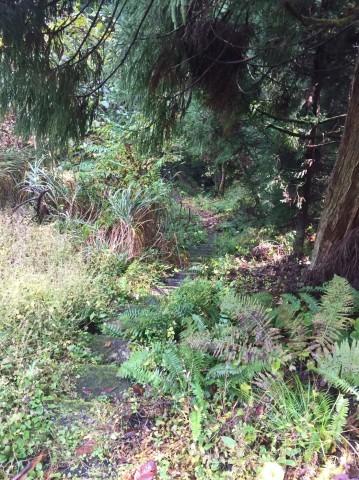 秋のトレッキング   大滝_e0115904_12345655.jpg