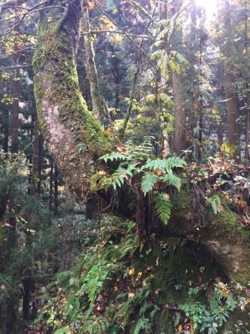秋のトレッキング   大滝_e0115904_12345678.jpg