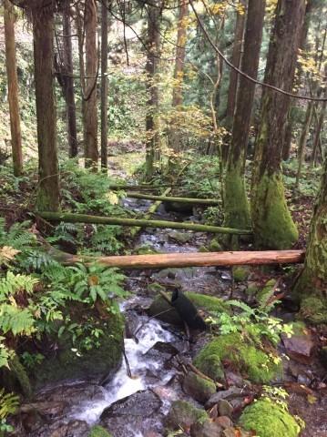 秋のトレッキング   大滝_e0115904_12362414.jpg
