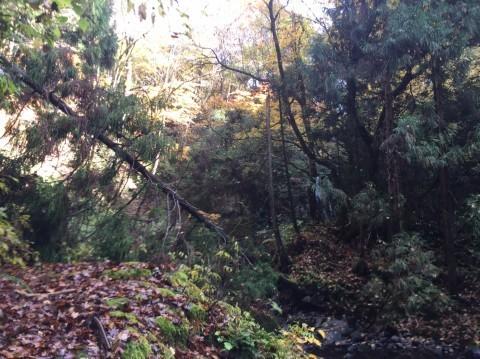 秋のトレッキング   大滝_e0115904_12402080.jpg