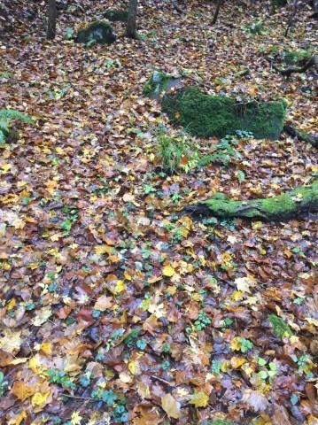 秋のトレッキング   大滝_e0115904_12405728.jpg